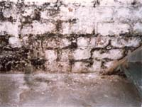 Mold Mildew Atlanta, GA