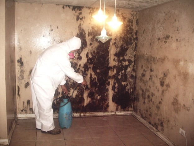 Mold Removal: How One Call Can Keep Your Family Safe