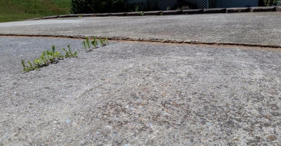 concrete-driveway-before-2